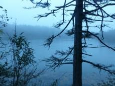 Misty Harbor Trail