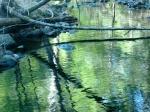 hemlocks reflected in quiet pool
