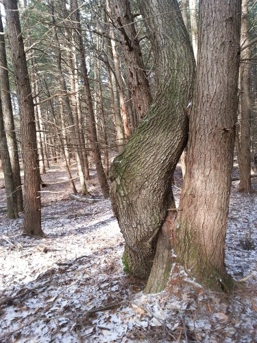 Tree hugger or hugging trees?  Hold onto the feeling of peace as you leave the woods and go on with your day.