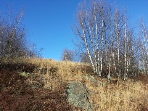 December sun glows on wild blueberry fields