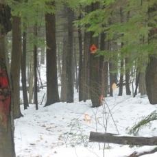 Trail blazes through the mist