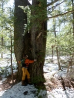 friend Kari hugging a very large pine tree