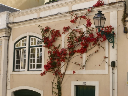 Flowering vine climbs a building in the Barrio Alto neighborhood (Lisbon)