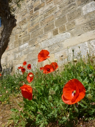 Poppies in front of Castelo de S Jorge (Lisbon)