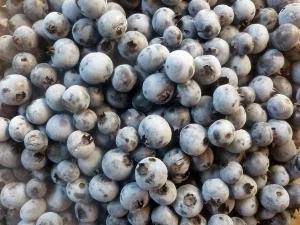 fresh-picked mountain blueberries