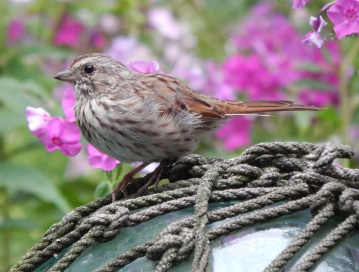 sparrow on glass ball_edited-1