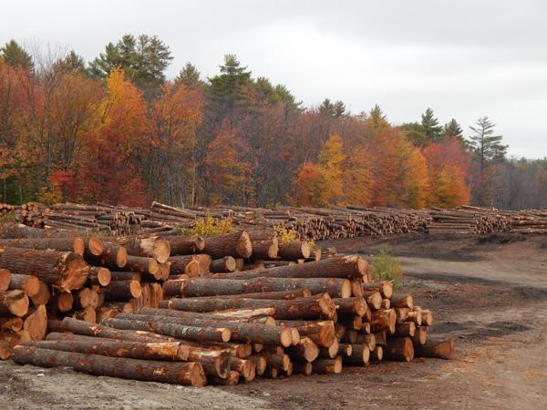 wood pile a - Copy