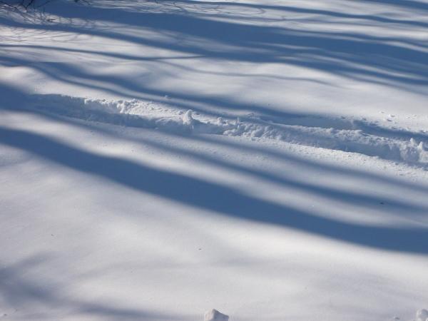 snow tracks (600x450)