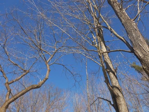 1 bare trees 2 (600x450)