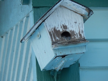 abandoned bird house