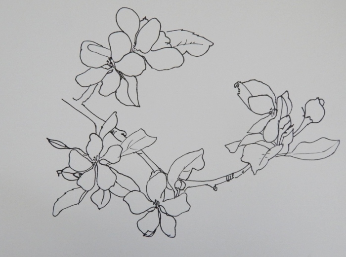 apple blossoms drawn with a fine sharpie - no erasing!