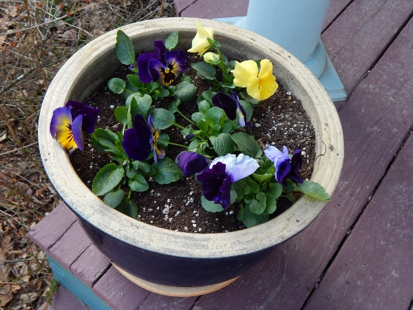 planted pansies.  in about 6 weeks it will be warm enough to plant summer flowers