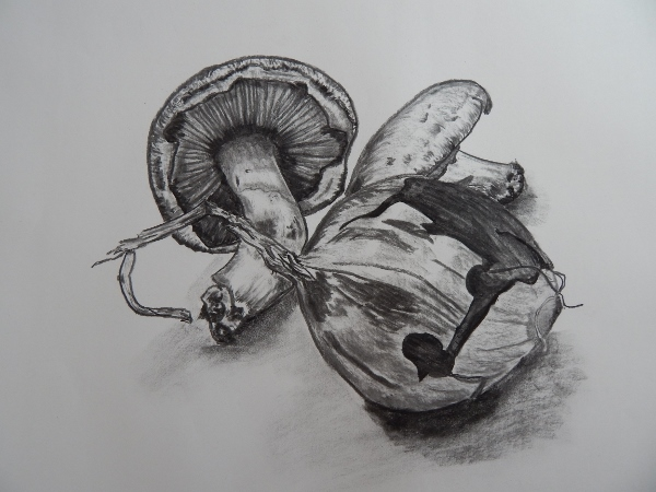 drawing dinner - red onions & portabello mushrooms in charcoal.  4/12/14