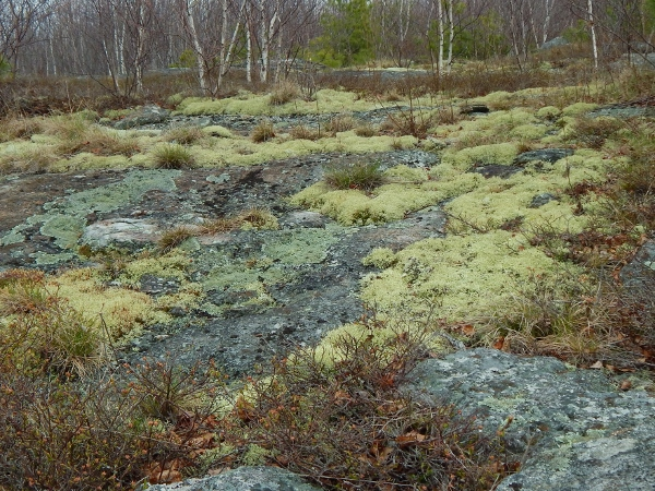 mossy slope - the soils here eroded long ago due to overgrazing of sheep in the late 1800s and a devastating fire in the early 1900s.  I wonder how long it will take for these plants to break down the rock into new soil?