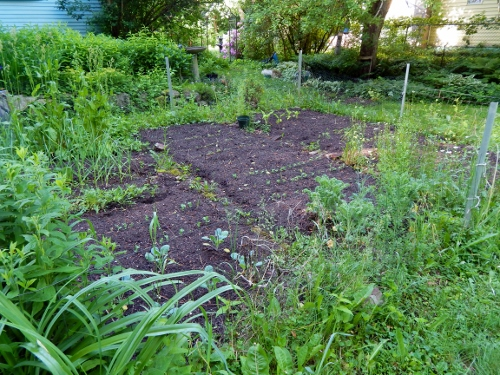 the veggie patch is just getting going though the sorrel and garlic is quite tall.  I've been eating the kale and can't wait for beet greens!