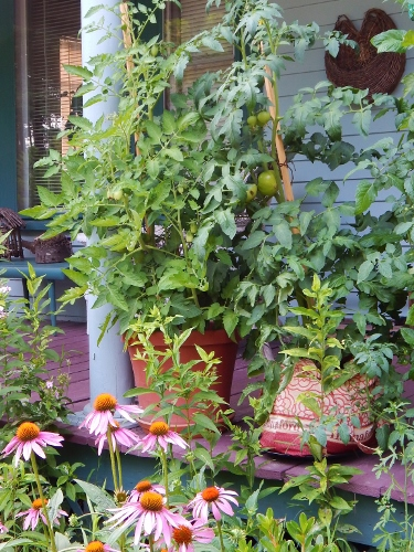 a pot and a fabric shopping back with tomatoes on the porch.  food & a privacy screen all in one!