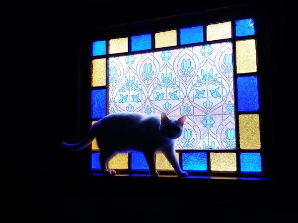 angel cat (600x450)