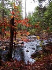 waldron woods fall (450x600)