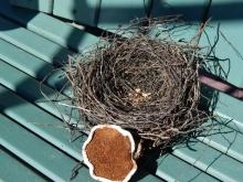 nest (600x450)