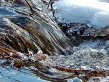 edge of beaver dam