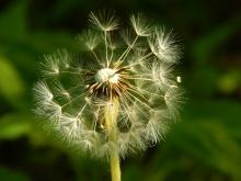 1 make a wish 3 (copy 2) (600x450)