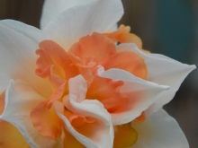 lovely, soft folds of orange