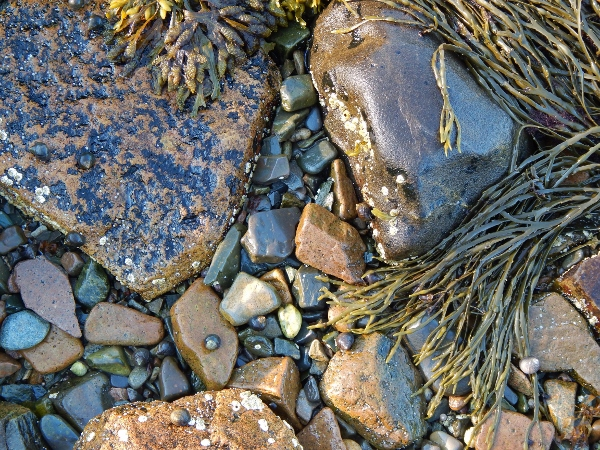 walk carefully! - a rocky beach in Maine