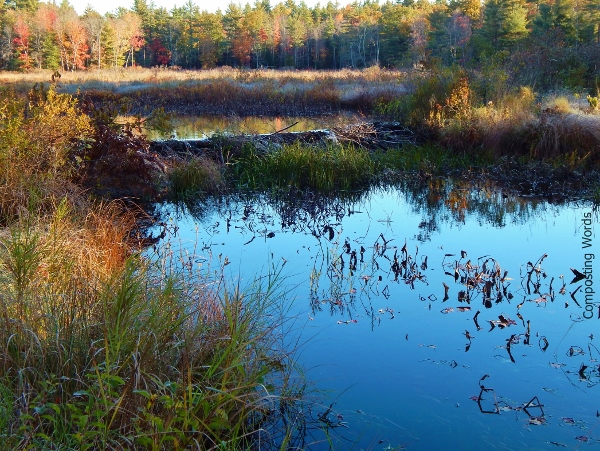 colorful foliage rings the outside of the beaver pond/marsh