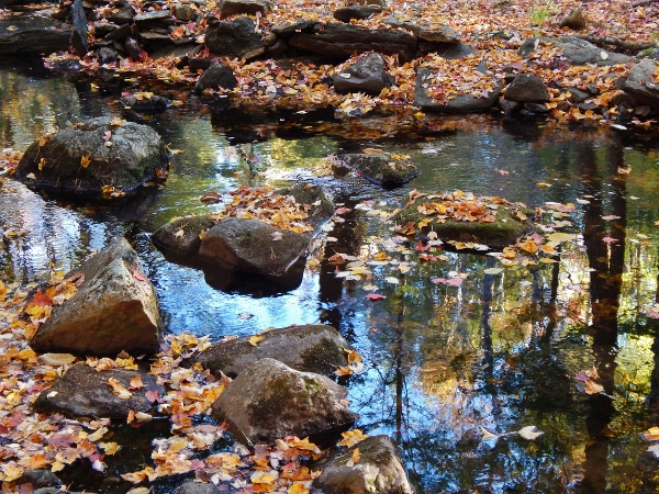 colorful leaves rest on the rocks along the river