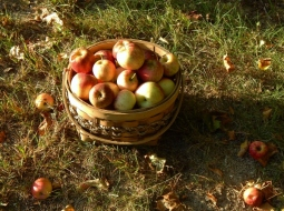 apple basket lawn (600x449)