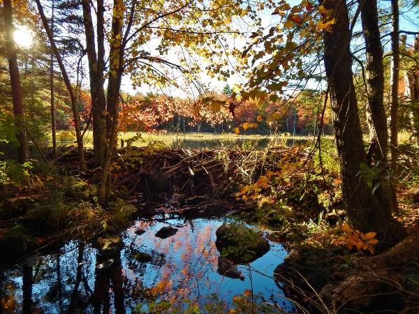 beaver dam brook 1 (600x450)