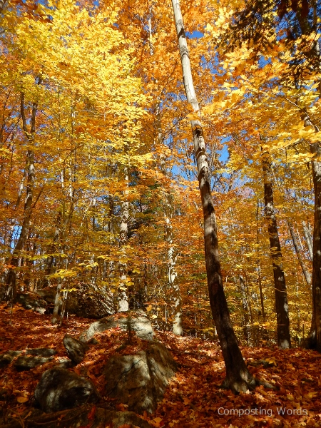 golden leaves on the trees and a carpet of color on the earth