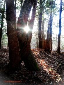hugging tree_pe rev vin_cw (450x600)
